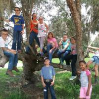 Camp Kids In Tree